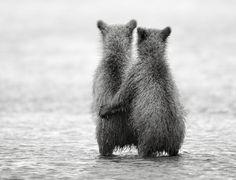 Faith, hope and love animals, nikolai zinoviev, salmon fishing, bear hugs, animal babies, brother bear, baby bears, bear cubs, friend