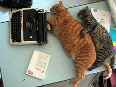 love #cats