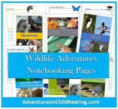 Homeschooling Adventurez: Wildlife Adventures - F is for Flight: FREE Animal Lesson on Butterflies