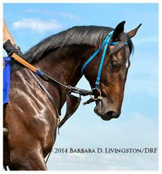 BEAUTIFUL photo of Cozmic One by Barbara D Livingston. Just stunning