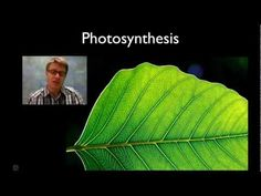 Photosynthesis week 12