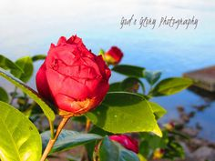 God's Glory Photography: The Rose Garden