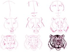 how to draw a tiger's head