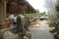 todos santos mexico | Todos Santos Restaurants - Todos Santos, Baja California Sur, Mexico