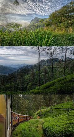 Tea country around Ella, Sri Lanka