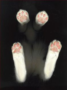 Cat Feet