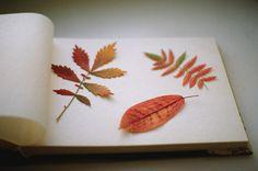 press leav, craft, fall leaves, fall season, pressing flowers