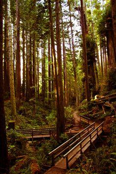 Redwood Park - Arcata, California.