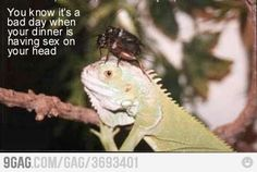 Bad Day.. anim, funni stuff, giggl, dinners, humor, bad, lizards, belly laughs, meme