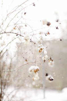 Cozy Winter /