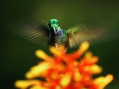 Louie Schwartzberg: The hidden beauty of pollination via TED