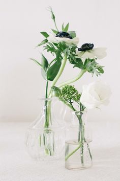 Simple white blooms