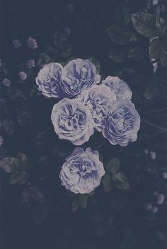 les fleur, blue flowers, stuff, purple flowers, beauti, purple roses, garden, floral, blue roses