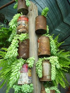 More Garden Containers You Never Thought Of… • Tons of Tips  Ideas! Love the contrast between these old repurposed rusted cans and the beautiful green of the burros tail.