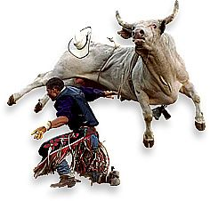 Rodeo Pictures Bull Riding - Bing Images