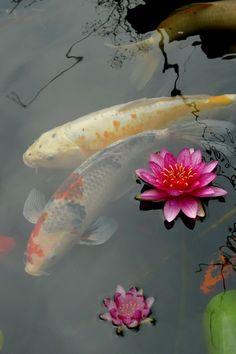 Japanese Koi Carps symbolize Goodluck, Longevity & Prosperity    Lotus symbolize Purity, Birth and Reincarnation