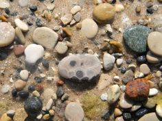 Petoskey stone, such fun hunting for these gems!!