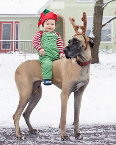 Hilarious photo idea for Christmas card - dress your baby up in elf clothes and let him ride your great dane!  :)  Of course, there was a little photoshop magic in this, just to be sure Zelda didn't take off after a squirrel and leave Jack high and dry (or wet, as the case may be).  But seriously, is this not the cutest and funniest photo pose idea ever for a dog and baby?