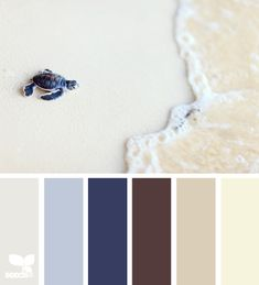 Brown, Cocoa, Tan, Blues... Design Seed, Color Palett, Living Rooms, Sea Turtl, Blues And Tan Paint Colors, Turtles, Color Pallet, Bedroom, Color Scheme