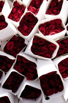 lots and lots of red roses