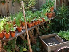 Growing Useful (and Holiday) Herbs  Posted on Nov 14, 2013