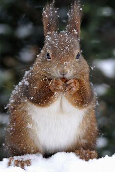 Squirrel Snow Dinner
