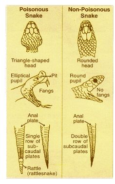 Snake Identifier Chart
