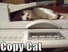 Copy Cat - cute!