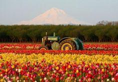 Holland Tulip Farms