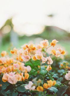 Pretty peach petals.   Photography: Rebecca Arthurs - www.rebecca-arthurs.com