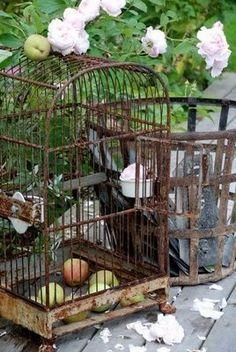 patina, treasur, bird cage, rusti cage, birdcages