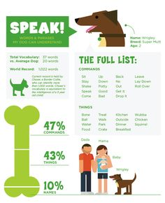 Words & Phrases my dog knows, including average words a dog knows and the world record for smartest dog. #caninecommunityreporters #wccrtv #pamppllc #caninemarketing #petinfographics #doginfographics #dogs