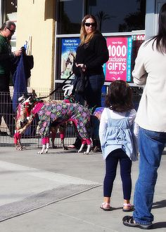 Funny Dog Dressed Up Pic!!