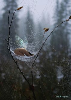 Web Safe