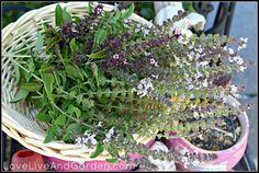 basil seed, garden pt, grow foodgarden, herb garden, easili harvest, free seed, harvest basil, seeds, edibl garden