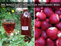 DIY Homesteading – Making Your Own Country Wines