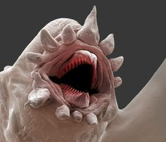 Polychaetes (bristle worms) from the ocean deep.