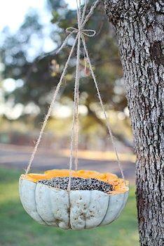pumpkin shell bird feeder