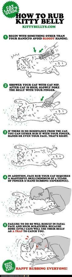 cats, rub kitti, kitti belli, anim, awesom kitti, funni, kitti cat, belli rub, kitty
