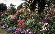 Mottisfont Abbey Rose Garden, Hampshire, England | An outstanding historic rose garden (19 of 20) | Splendid flower border with shrub and rambling roses