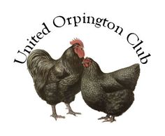Home - United Orpington Club