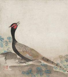 Pheasant, 1658-1716 Ogata Korin , Japan. Cleveland Museum of Art