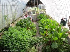 In the homemade greenhouse on May 2nd. One of 31 photos in this week's Friday Farm Fix, a new series on Farmgirl Fare where I share a random sampling of what's been happening during the week.