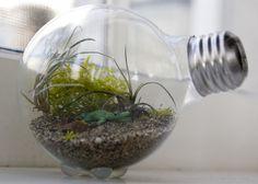 diy tiny light bulb terrarium.