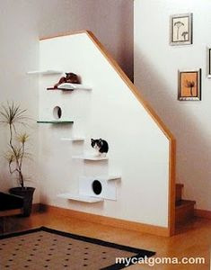 Cat shelves - off of stair wall ..or a regular wall... ATTN: Cheryl Caldwell-good idea for Kady cat!! (: