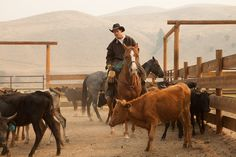 Host Ryan Van Duzer takes a stab at team penning — cowboys call out numbers correlating to certain cattle and guests try separating them from the herd. Photograph by Robert Wright