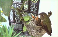 Check out this hummingbird webcam.