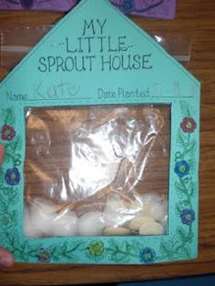 """My Little Sprout House"" a ziplock baggie stapled behind a cute little house... seeds, cotton balls holding water and hang them in a window to watch them sprout and grow. so cute for a classroom."