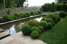 Jake Hobson . cloud pruning & organic topiary . box