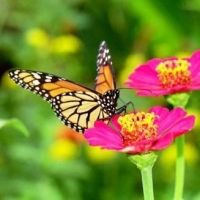 How To Start A Vegetable Garden - 30 Day Challenge - Day 26 - The Great Pollinators